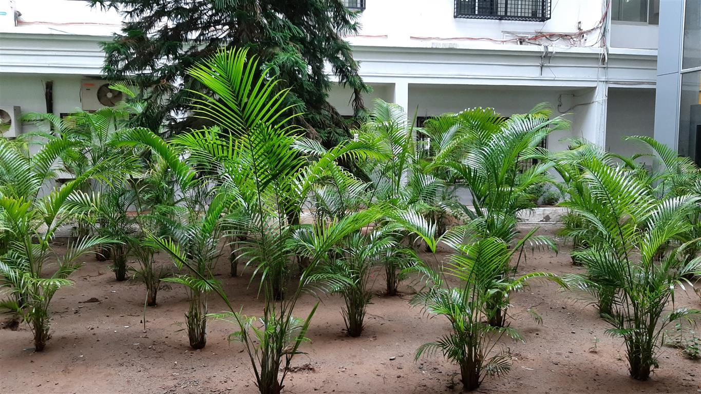 Green landscaping 5